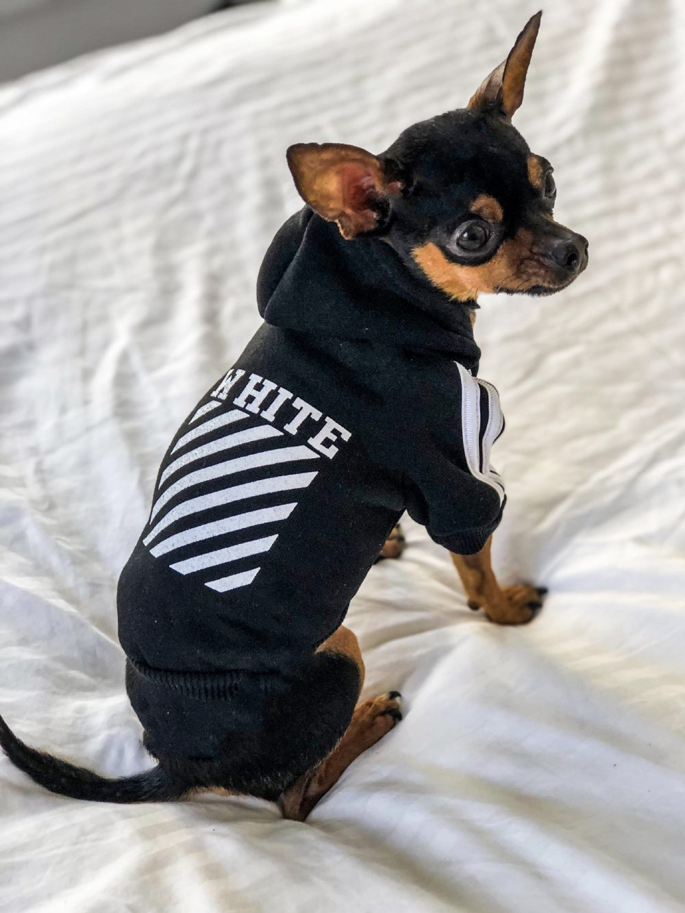 Woof-white - Furbaby Couture