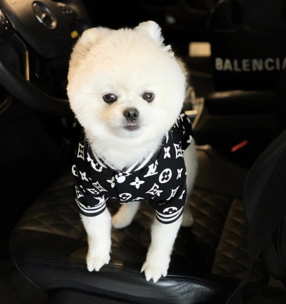 Love Me Bomber - Furbaby Couture