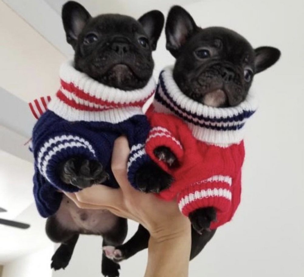 Moscow - Furbaby Couture